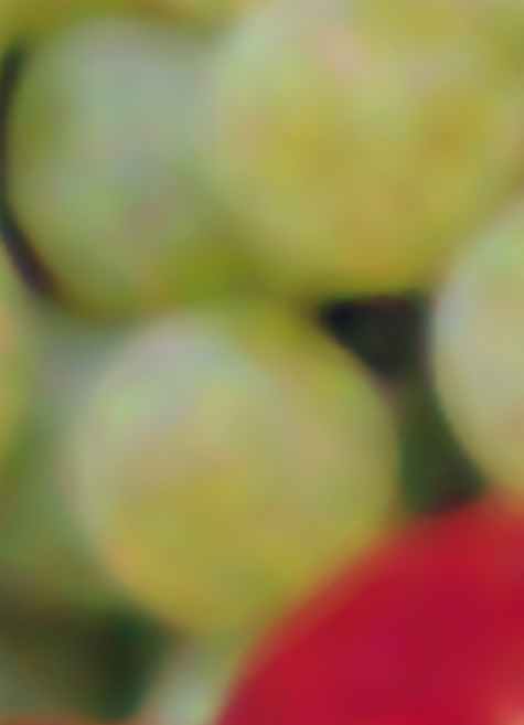 grapes_bitonic_fixed.png